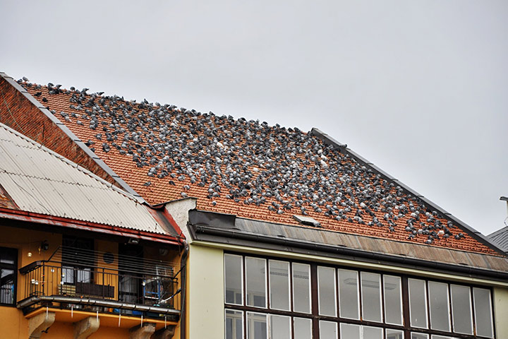 A2B Pest Control are able to install spikes to deter birds from roofs in Sutton.