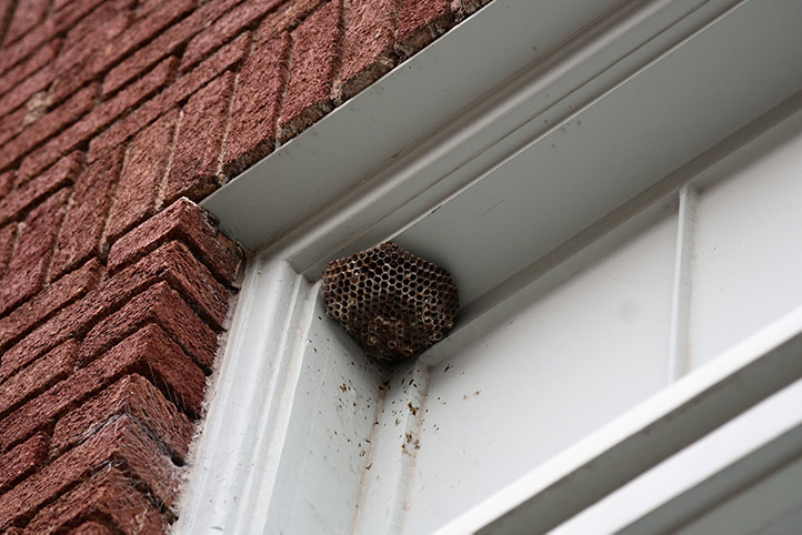 We provide a wasp nest removal service for domestic and commercial properties in Sutton.